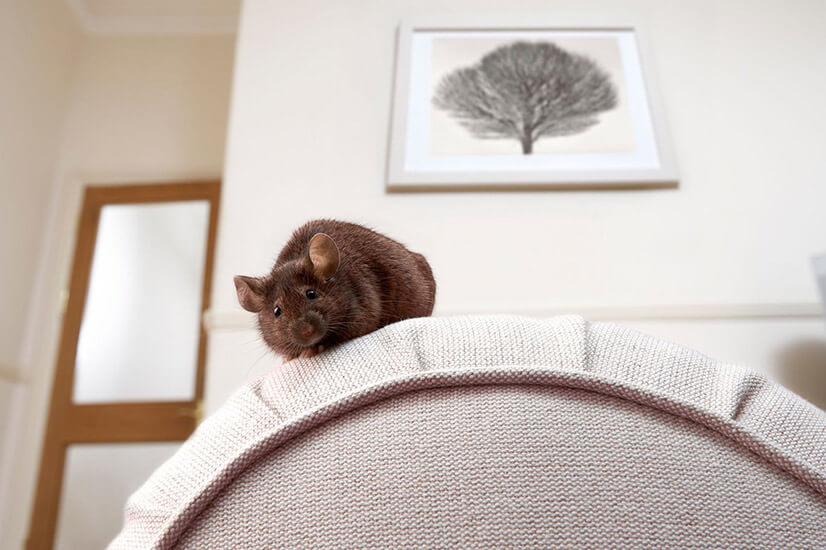 Избавляемся от мышей в доме: способы борьбы и отзывы