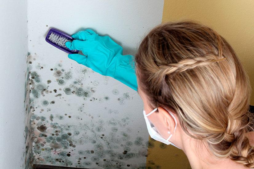 Как избавиться от грибка на стенах?