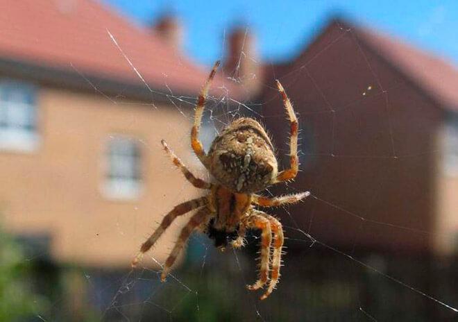 Виды пауков в России