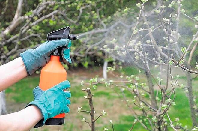 Сезонные обработки растений медным купоросом