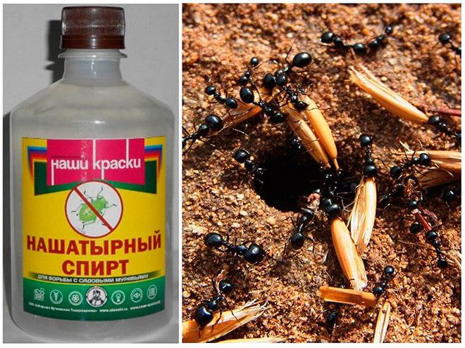 Нашатырный спирт для борьбы с муравьями