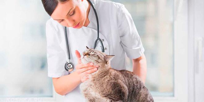 Плоские паразиты у кошек