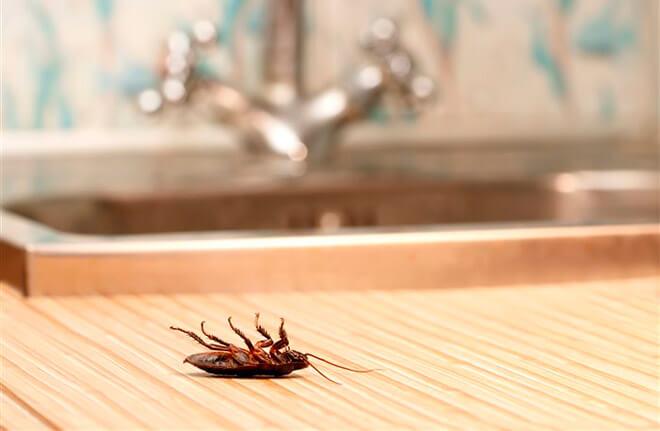 Средство от всех видов насекомых