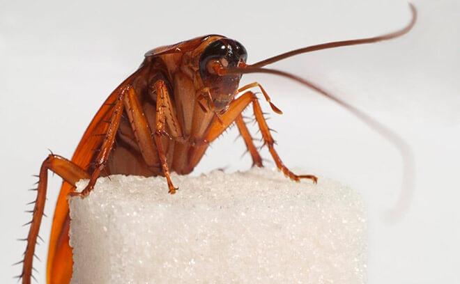 Тараканы в доме
