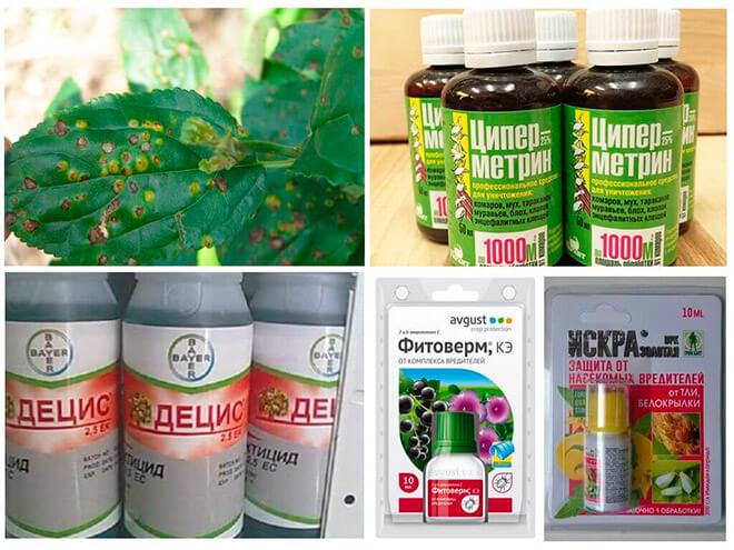 Химические препараты против тли