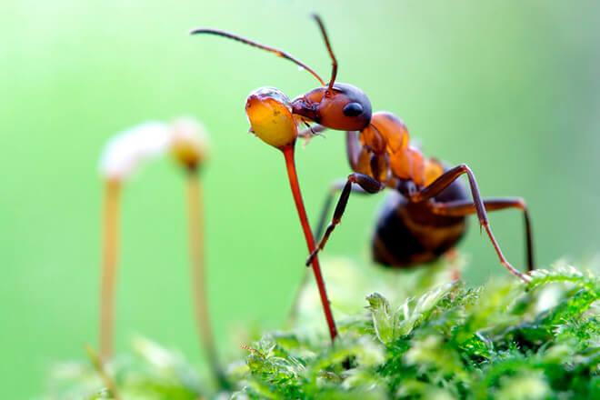 Лесные муравьи польза и вред
