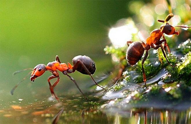 Что делают муравьи зимой в природе