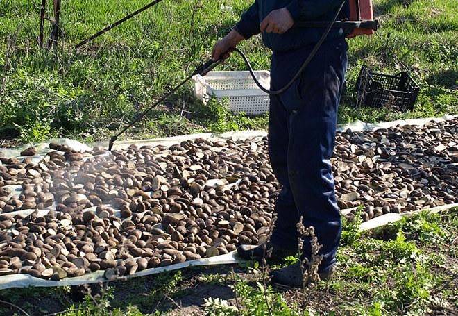 Обработать картошку