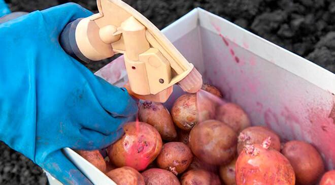 обработать картошку перед посадкой