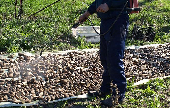 Инструкция Престиж для обработки картофеля